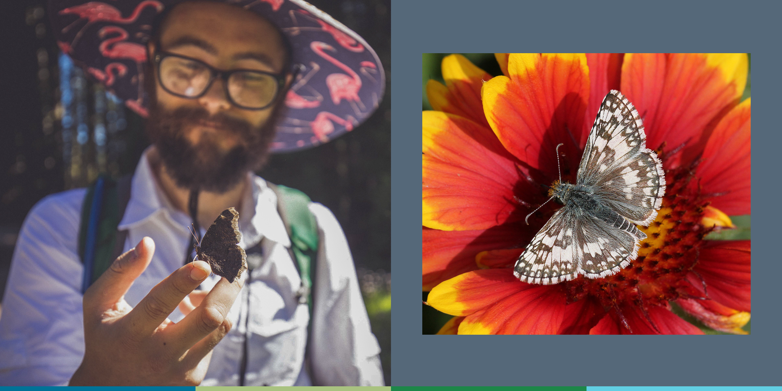 This composite image shows, on the left, a young bearded man admiring a butterfly sitting on his fingers and, on the right, a small brown and white butterfly resting in the center of a red and yellow flower