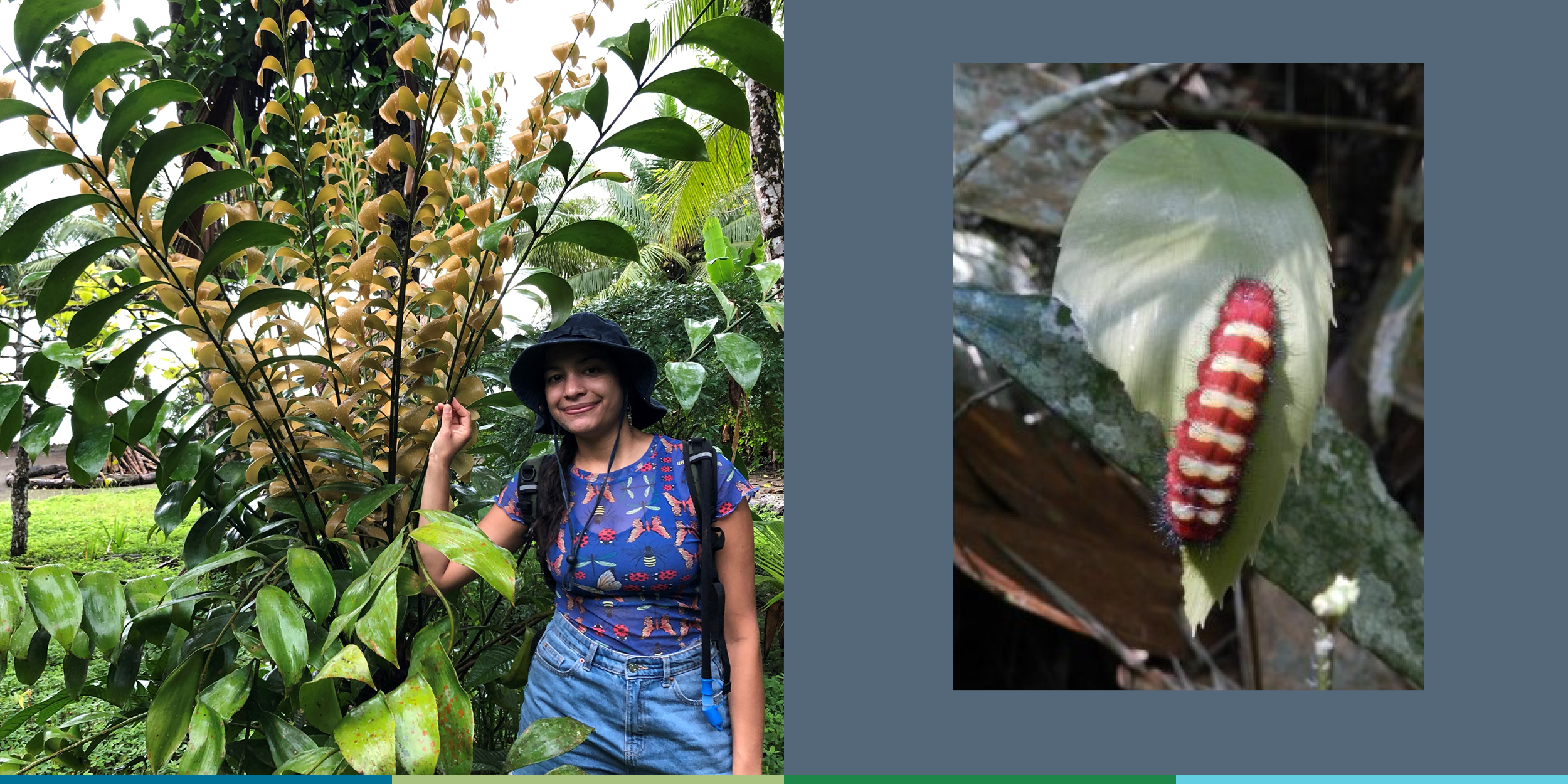 This composite image shows, on the left, a smiling young woman standing beside a green and brown cycad bush and, on the right, a distinctively marked red and cream colored caterpillar