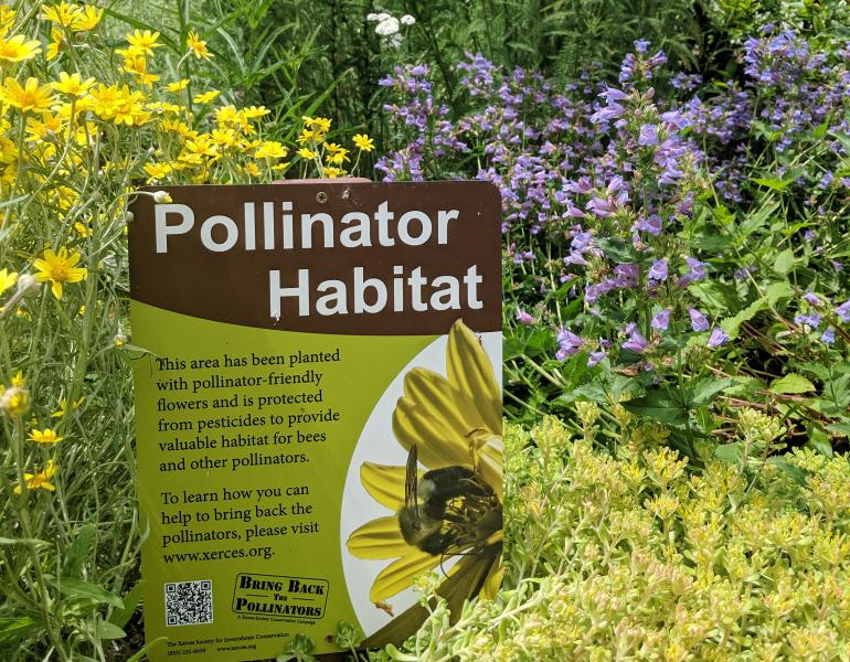 A pollinator habitat sign sits proudly among many bright blooms.