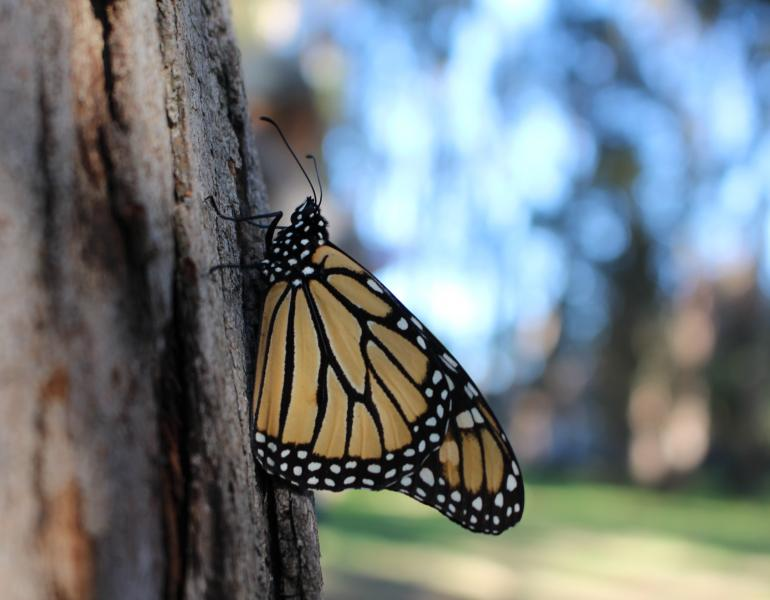 A monarch clings to the trunk of a tree in a dimly-lit landscape.