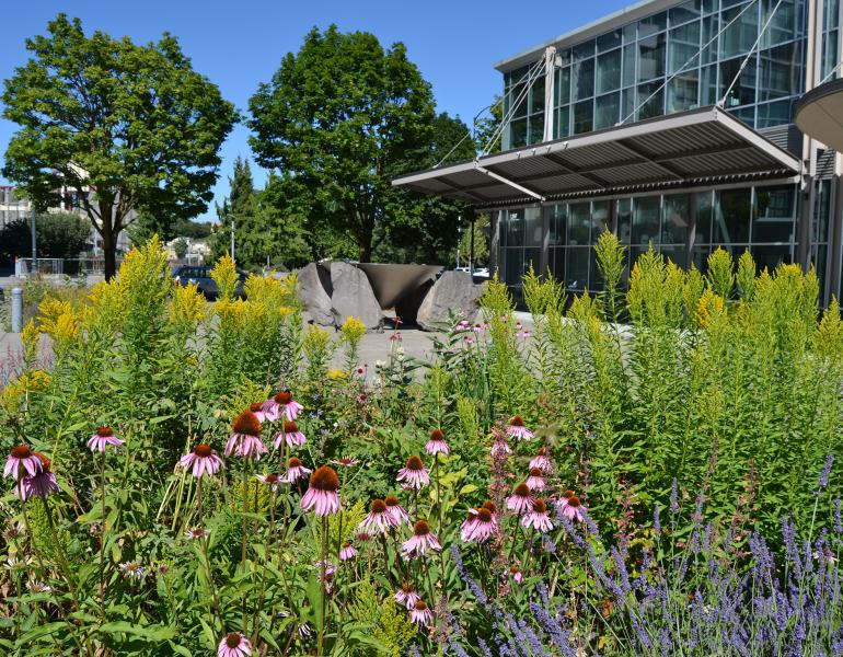 Landscaping outside an office building includes purple coneflower and goldenrod.