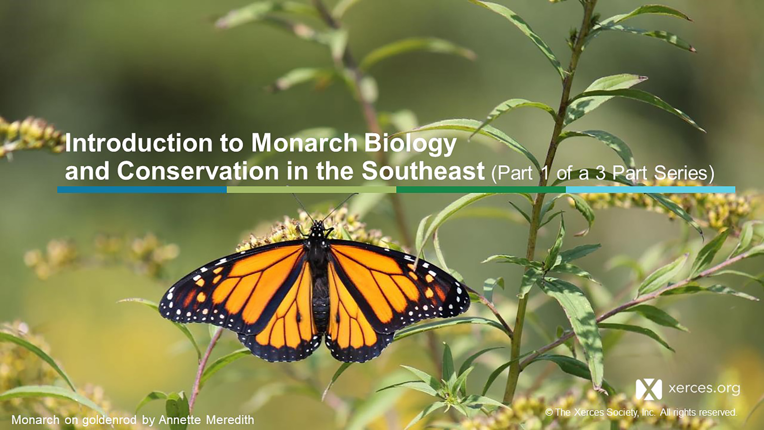 This image shows the first slide from a presentation. The slide has text and a photo of a black-and-orange monarch butterfly