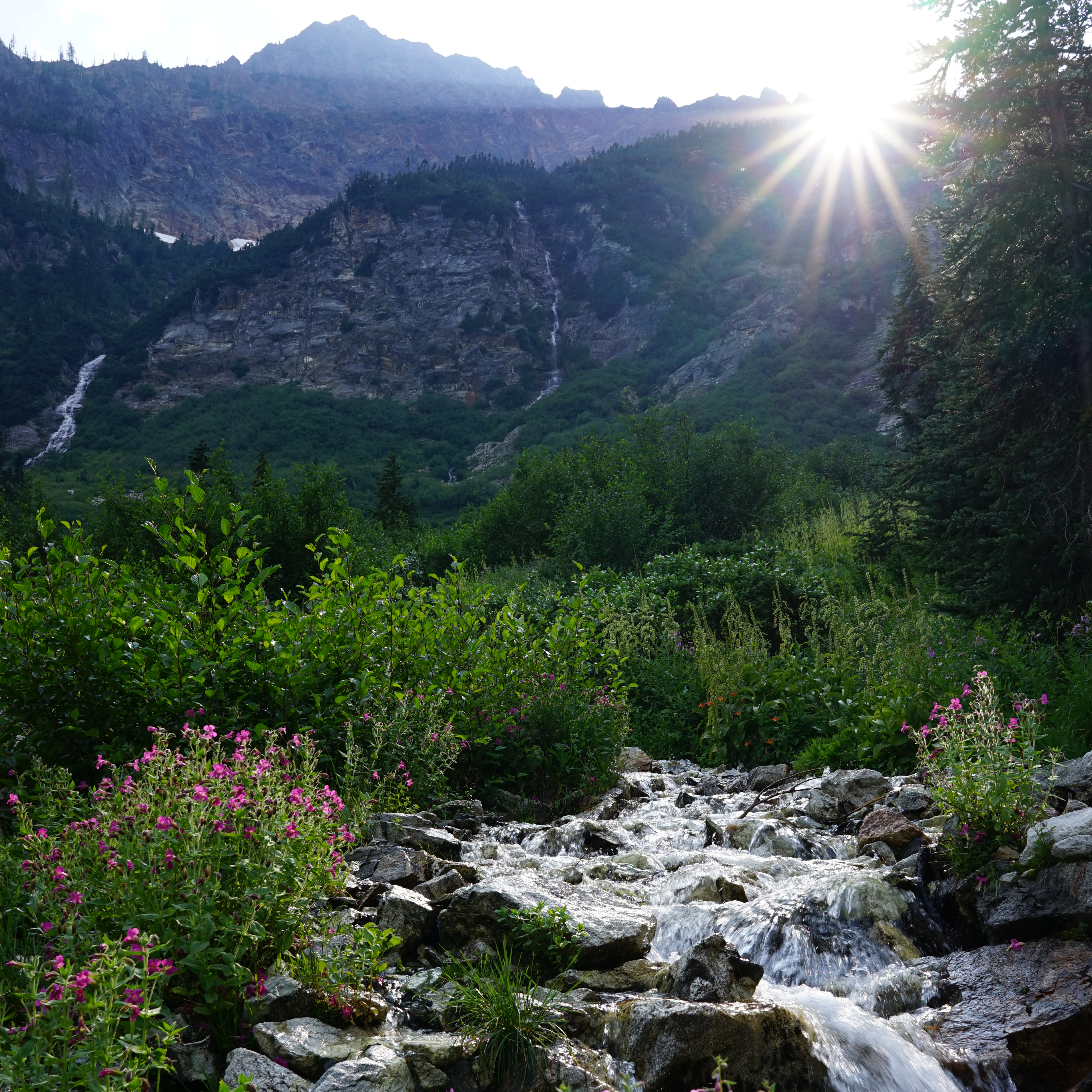 A mountain stream filled with boulders and white water is framed by flowering plants.
