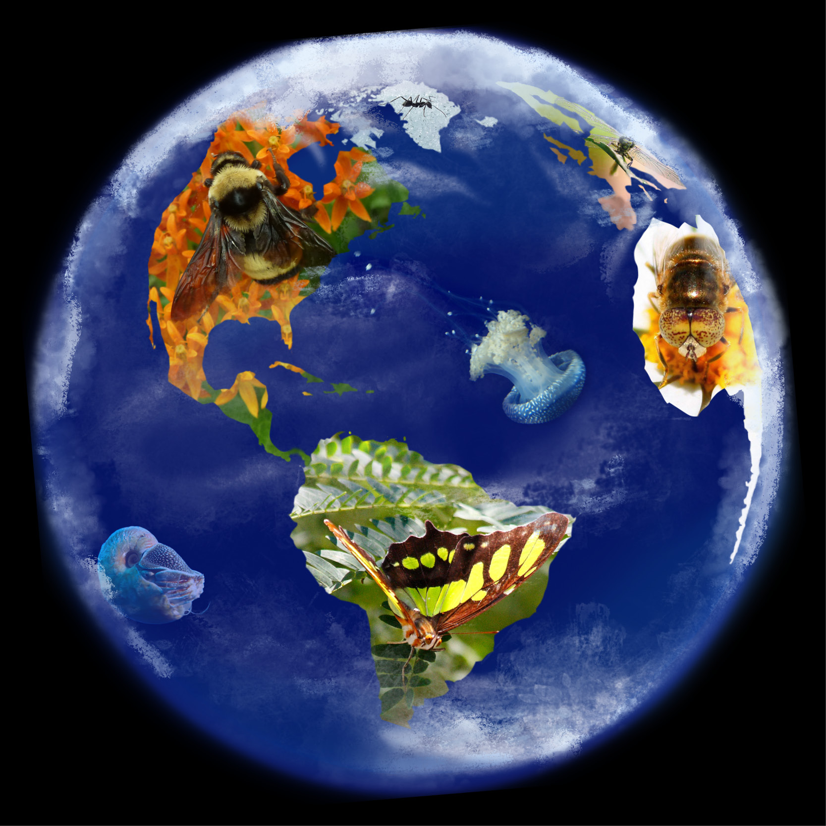 A globe with images of invertebrates, including a bumble bee on North America, and a butterfly on South America, that are photoshopped into the continents and oceans.