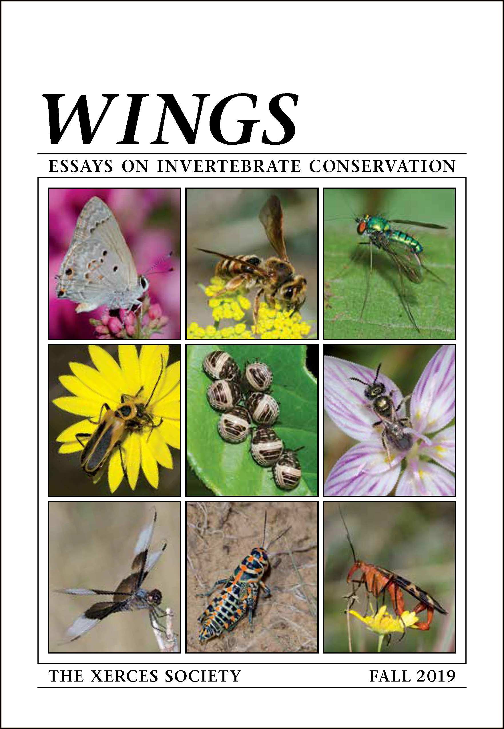 The cover of an edition of Wings is shown. In large text at the top is