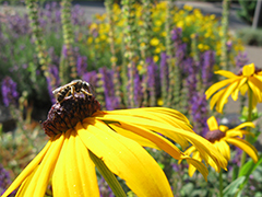 Pollinator-Friendly Plant Lists