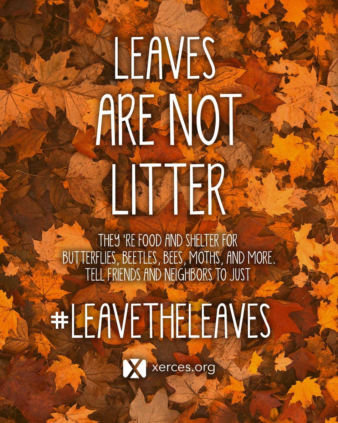 "Colorful orange and red leaves have white text over them that reads ""Leave the Leaves!"""