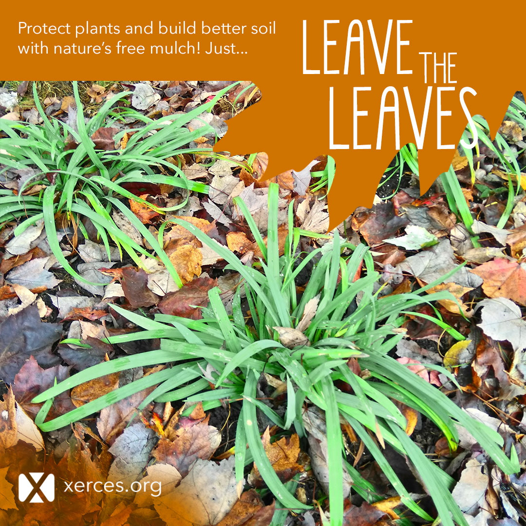 A garden with leaves around bright green plants is shown in this Leave the Leaves! graphic.