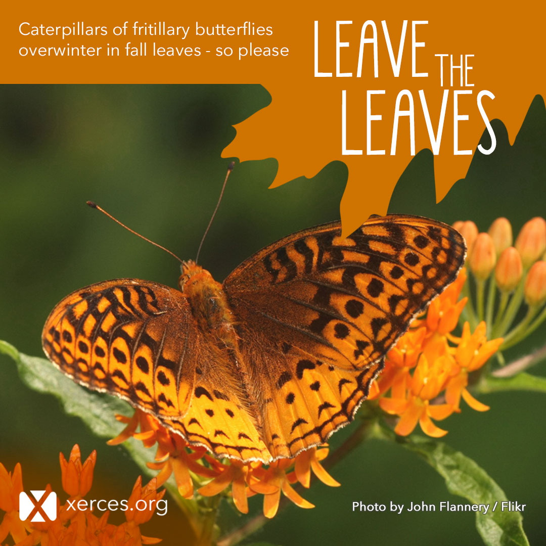 A beautiful, orange and brown butterfly spreads its wings in this Leave the Leaves! graphic.