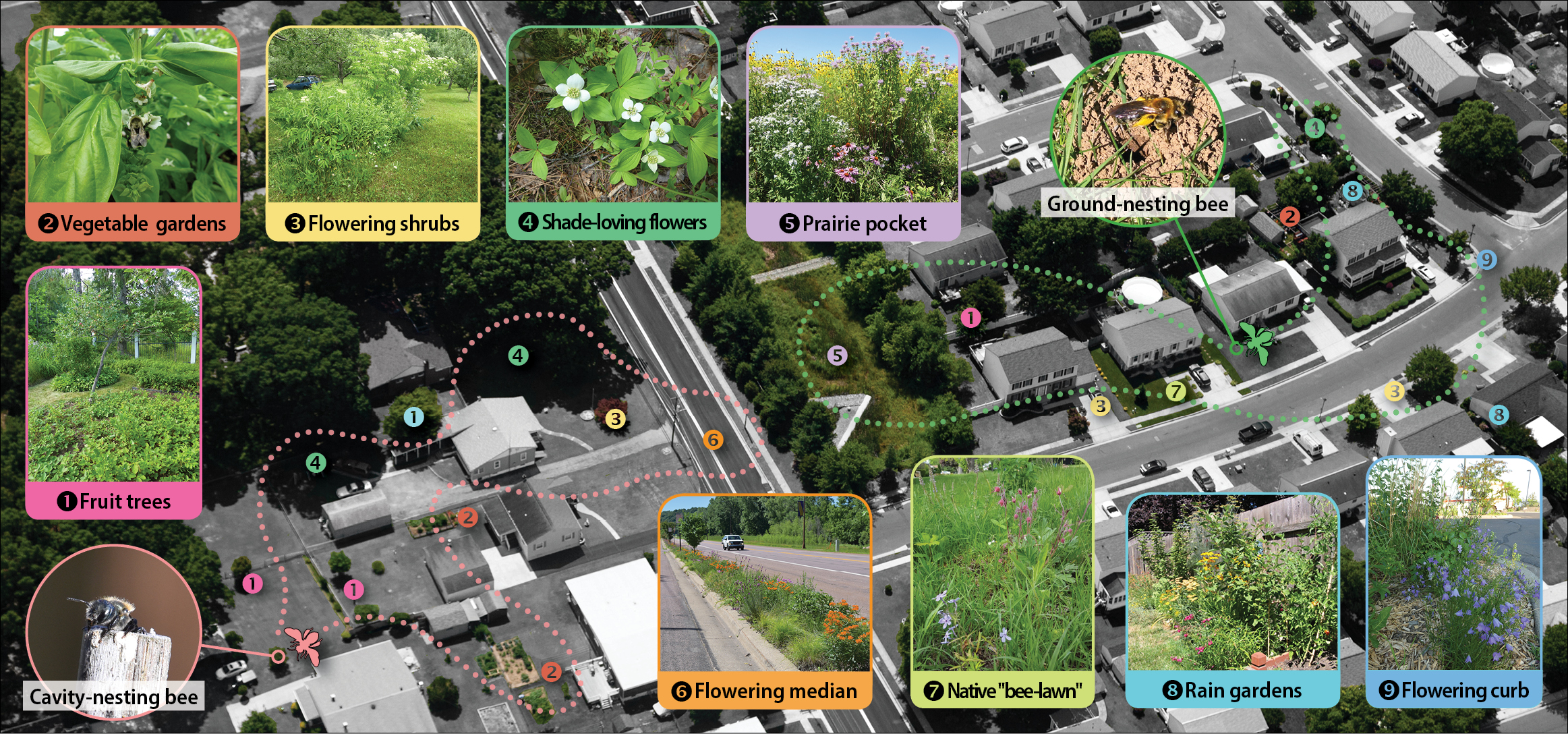 "This diagram, superimposed over an aerial image of a housing development, shows the different types of habitat that can exist in yards and other urban areas, including fruit trees, vegetable gardens, flowering shrubs, shad-loving flowers, a ""prairie pocket,"" and loose dirt suitable for ground-nesting bees."