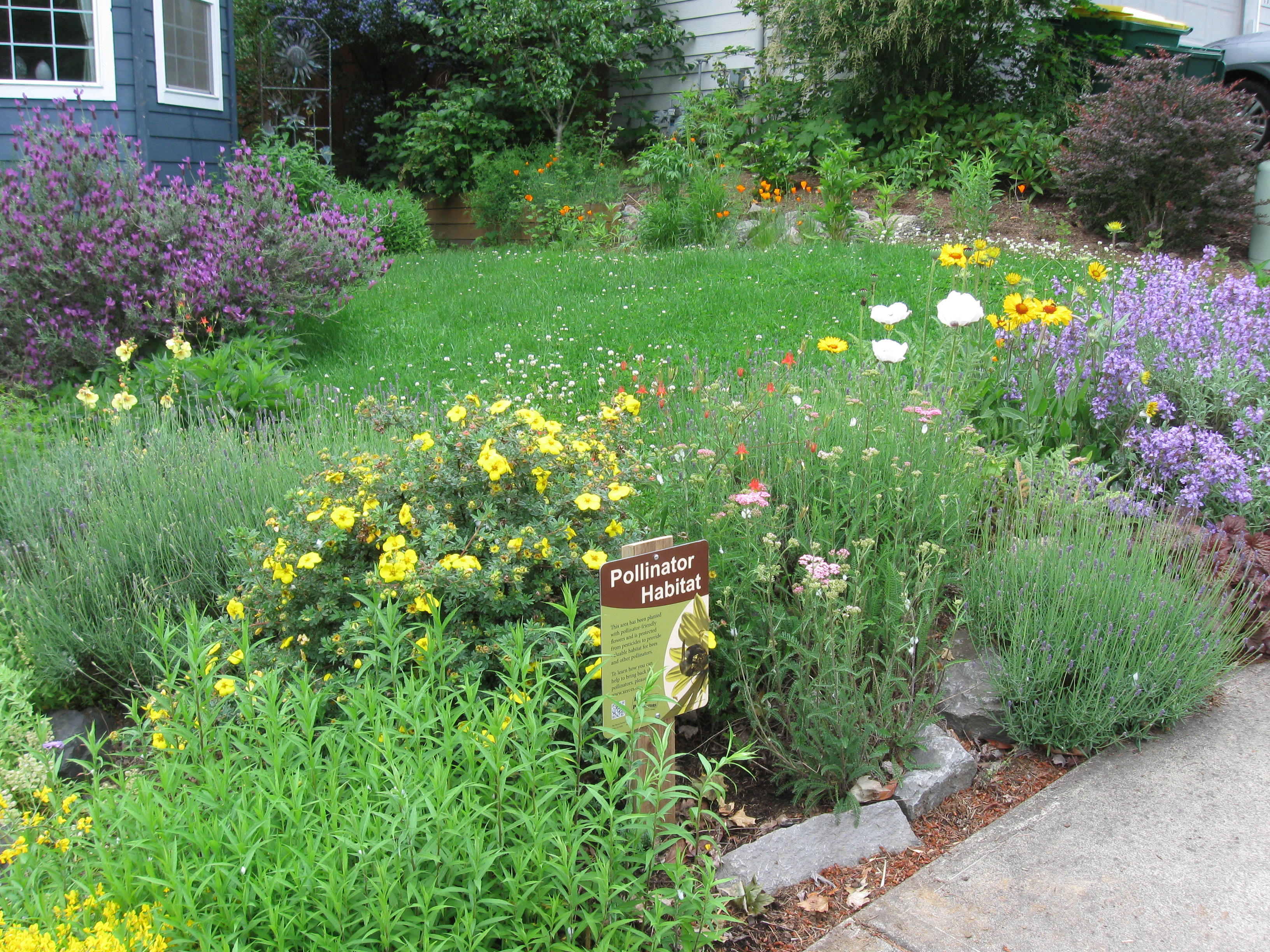 A pollinator habitat sign standing among an abundance of flowers in a suburban front yard.