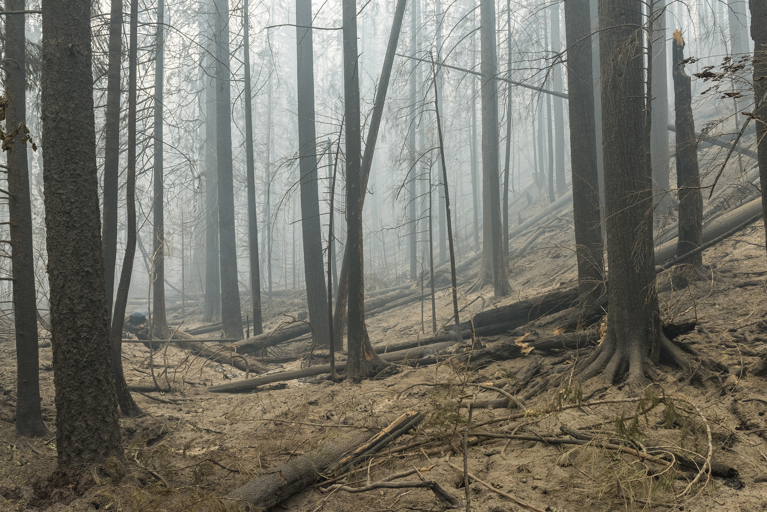 Smoke hangs over the charred trees and barren soil of a badly burned forest.