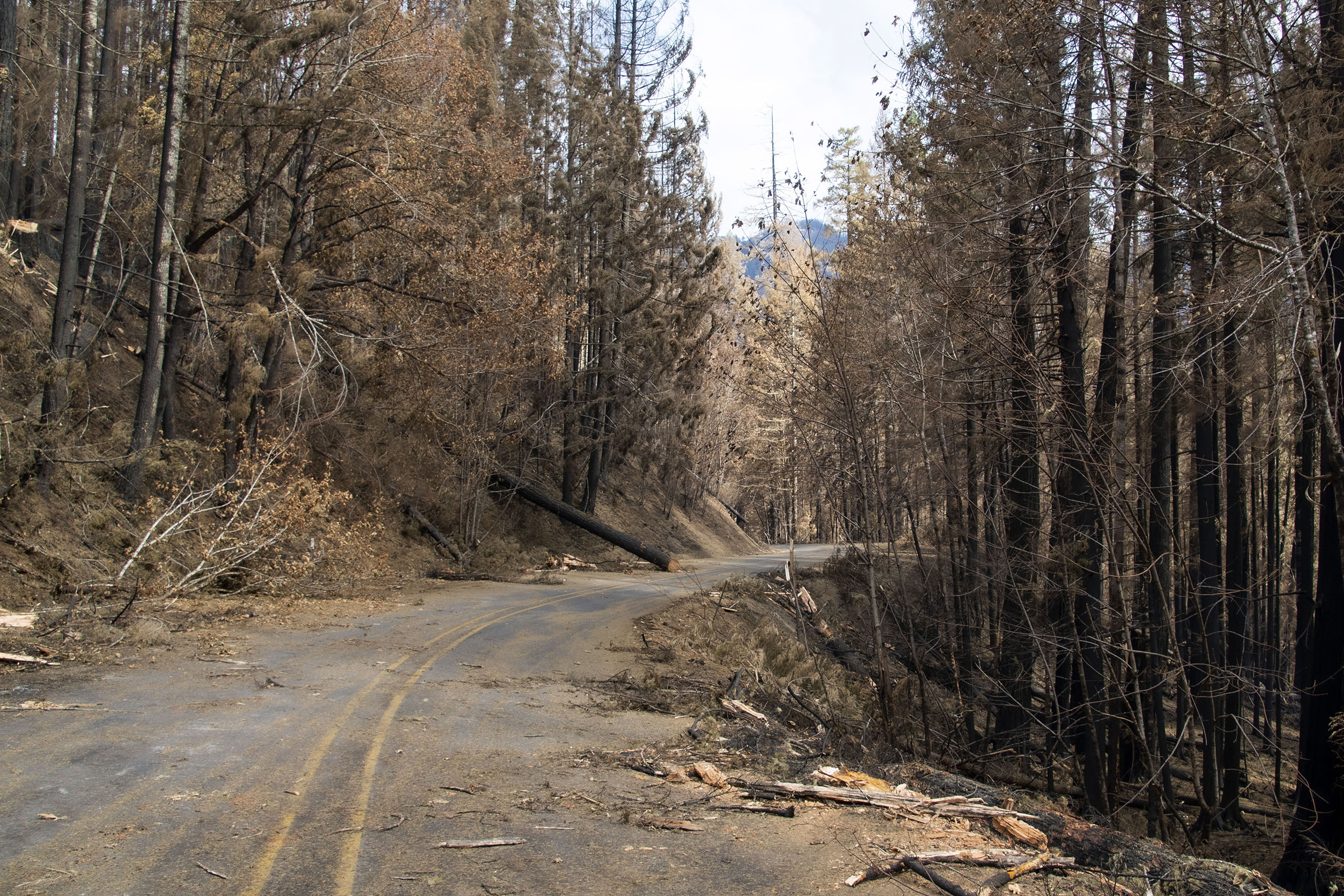 A narrow road curves through a forest burned by wildfire. The road is covered with fallen trees.