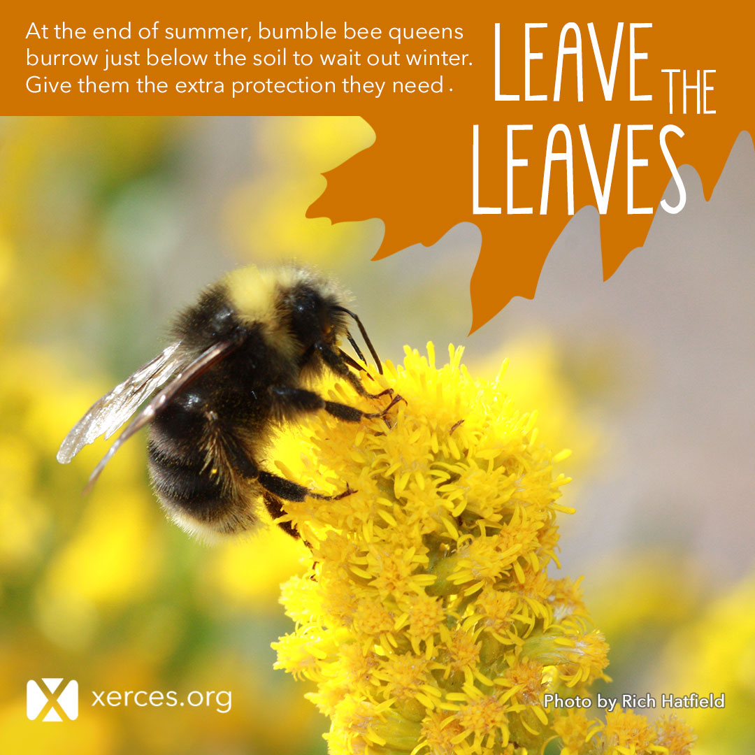 A bumble bee perched atop a yellow flower appears in this Leave the Leaves! graphic.