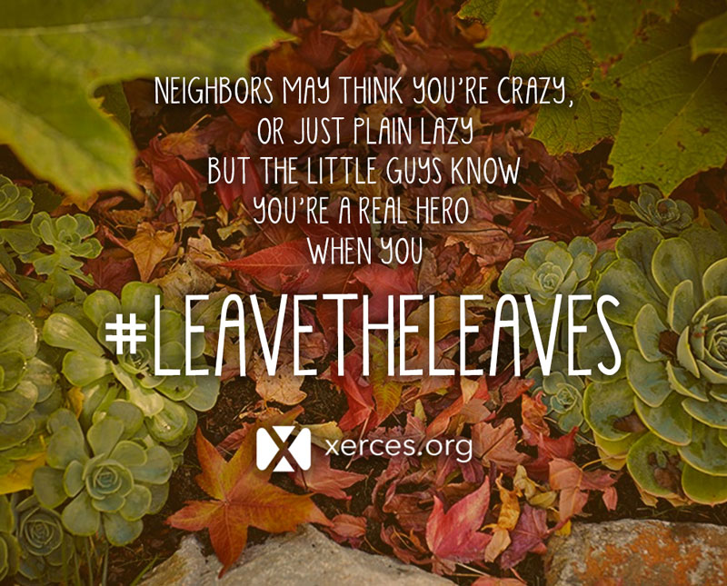 "A little poem is superimposed over colorful fall leaves: ""Neighbors may thin you're crazy, or just plain lazy, but the little guys know, you're a real hero, when you #leavetheleaves!"