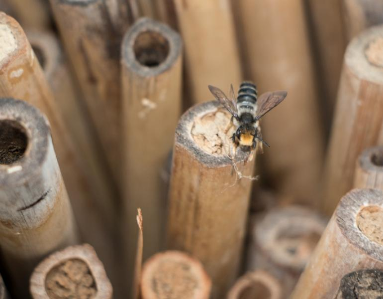 Numerous bamboo tubes stand upright. Some have hollow ends, and some have mud filling the opening. A small bee perches atop one of them.