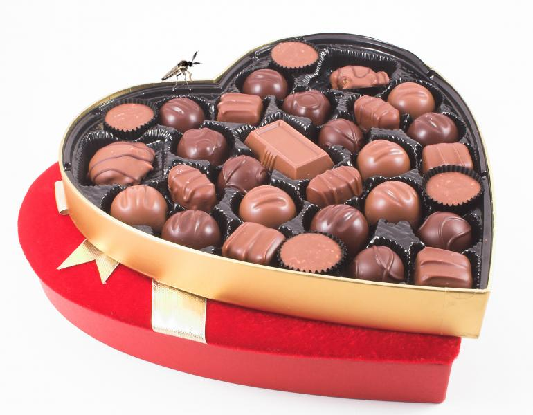 A heart-shaped box of chocolates with the lid off is shown, with a small fly perched on the rim.