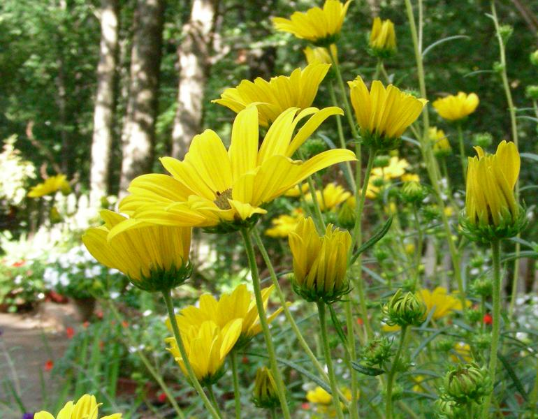 Bright yellow flowers reach upwards in this low-angle shot.