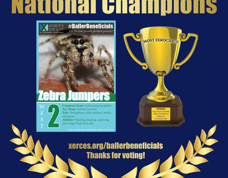 National Championship winner of Baller Beneficials, the zebra jumpers.