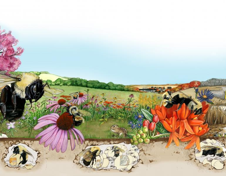 An illustrated landscape showing changing seasons (for instance, a tree that is half bare and half covered in bright pink blooms) shows bumble bees in various stages of their life cycle, including underground nests, foraging, and larvae.